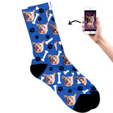 Dog on socks blue