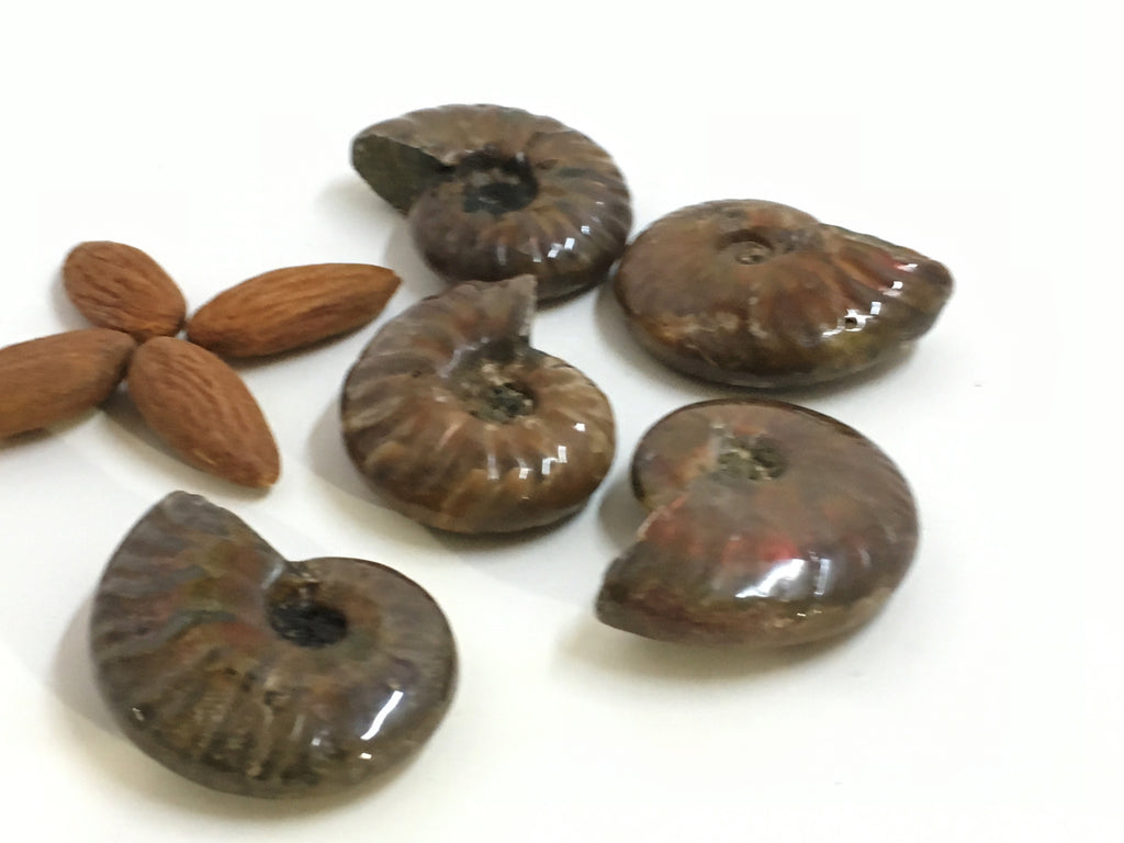 Ammonite - Red Sheen Polished