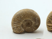 Ammonite - Polished White Ribbed
