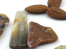 Petrified Wood: Polished