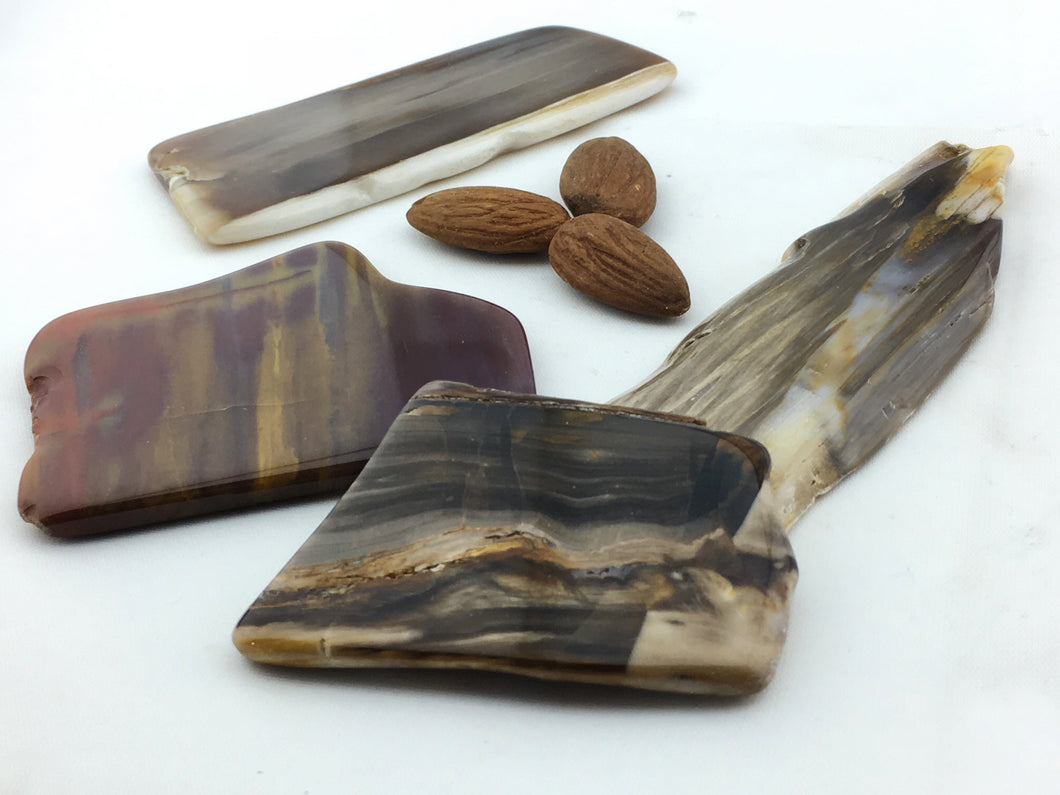 Petrified Wood: Polished (XLarge)