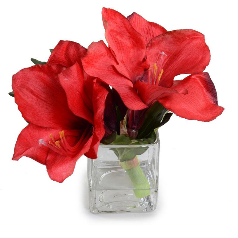 Amaryllis Cutting in Glass Red