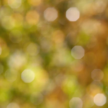 Bokeh Photo Backdrop - Green and Brown