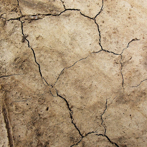 Nature Photo Backdrop - Cracked Earth
