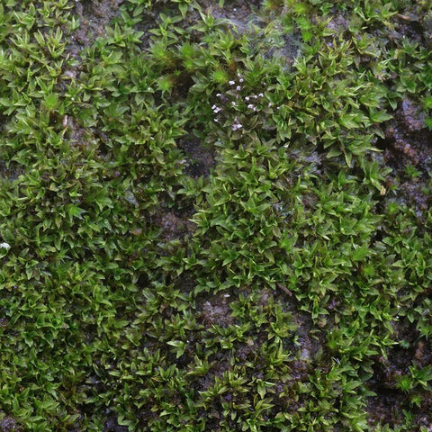 Nature Photo Backdrop - Mossy Stone Backdrops Loran Hygema