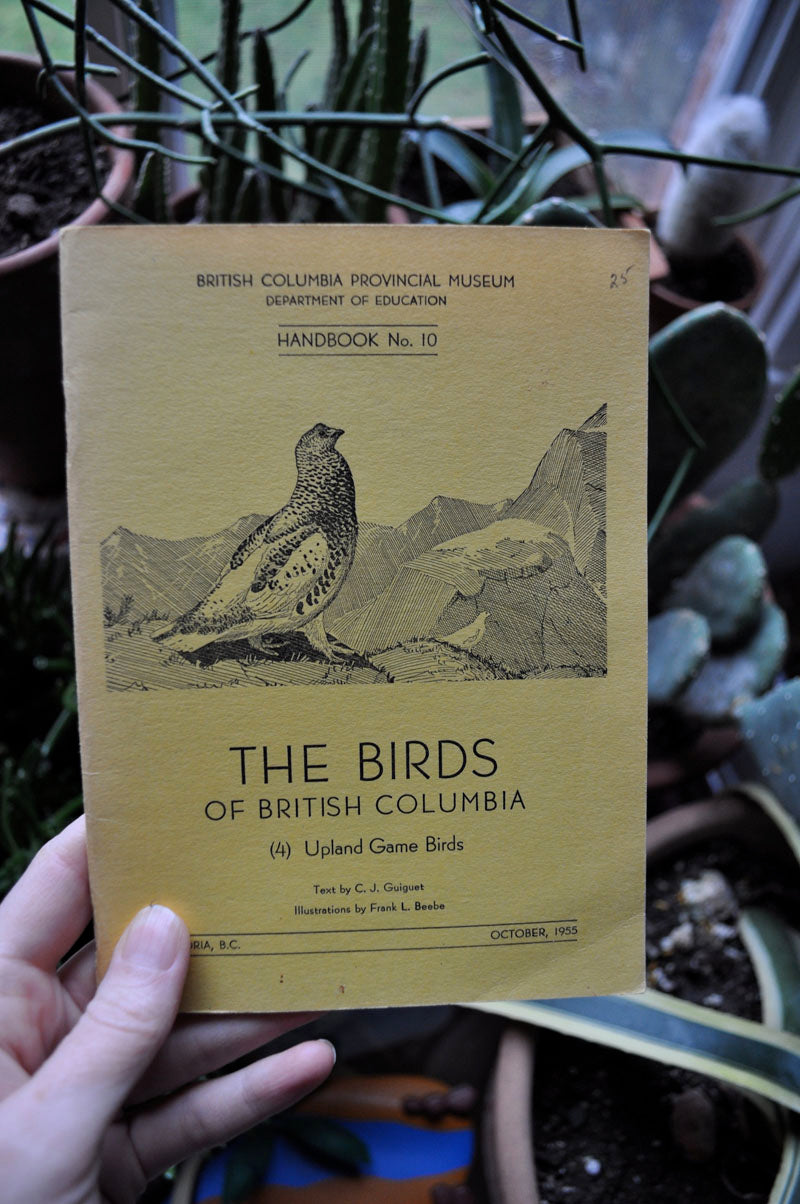 the birds of british columbia