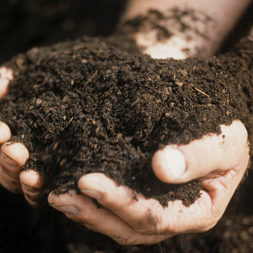 The Incredible Seed Guide to Backyard Composting
