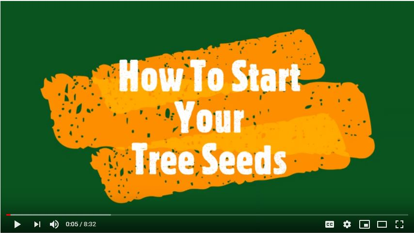 How To Start Your Tree Seeds