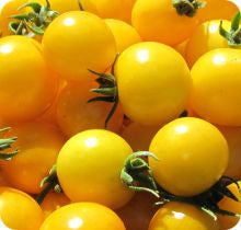 Gold Nugget Cherry Tomato