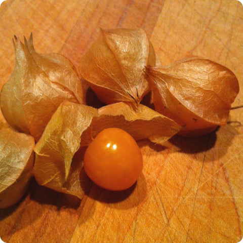Ground Cherry Seeds - Aunt Molly's