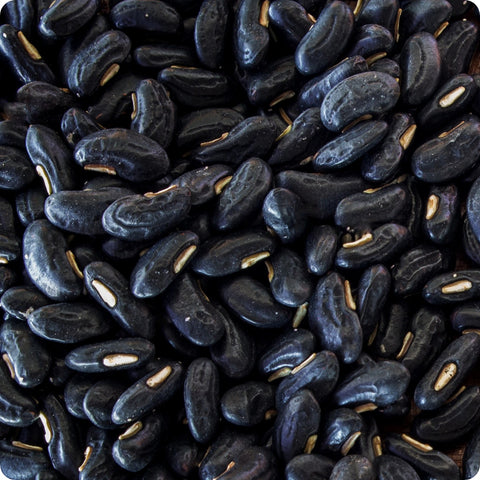 Bush Bean Seeds - Black Valentine