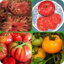 Brandywine Tomato Patch Collection