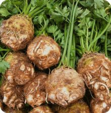 Celeriac - Brilliant