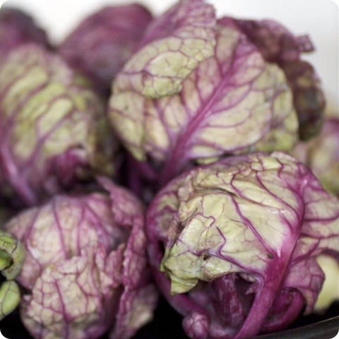 Falstaff Brussels Sprouts Seeds