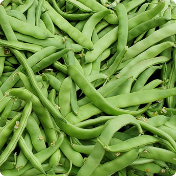 Bush Bean Seeds - Roma II