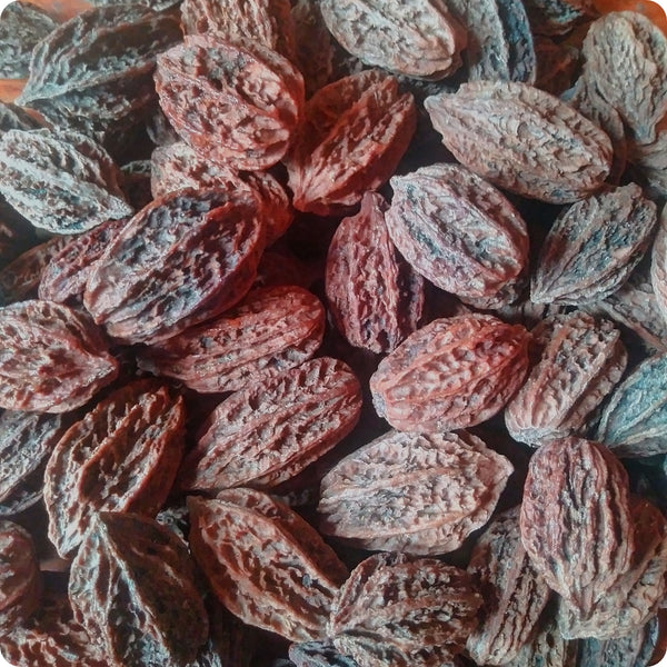 Butternut Tree Seeds