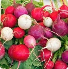 Easter Egg Radish Seeds - Mix