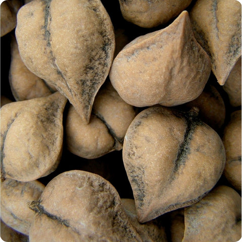 Heartnut Tree Seeds