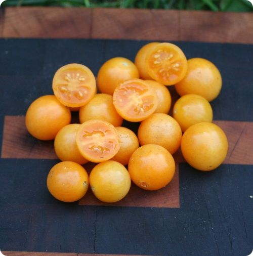 Honey Drop Cherry Tomato Seeds