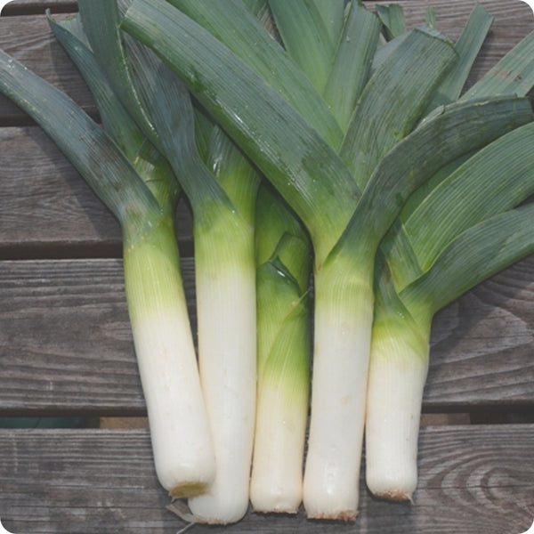 Leek Seeds - King Sieg
