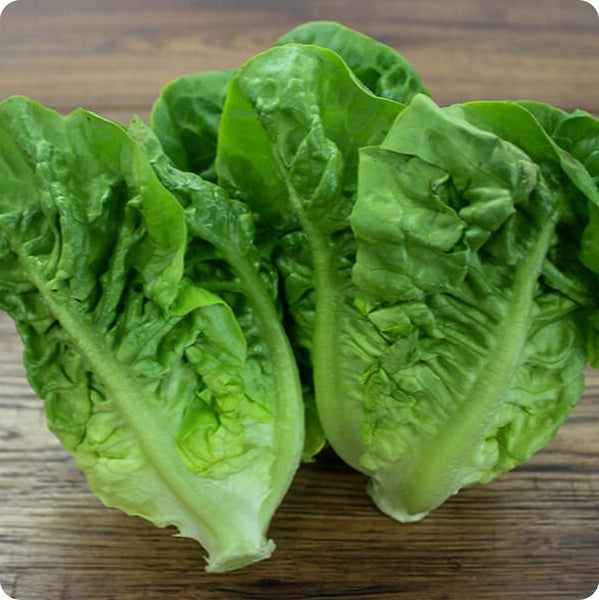 Lettuce Seeds - Little Gem