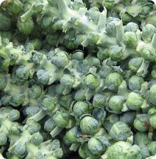 Long Island Brussels Sprout Seeds