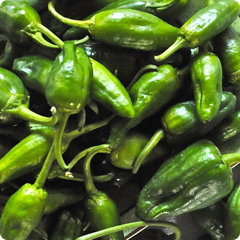 Padron Hot Pepper