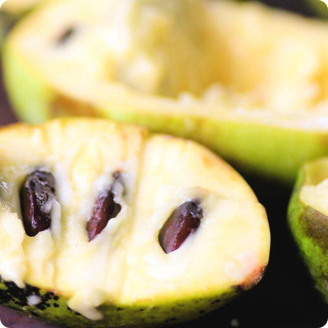 Pawpaw Seeds (Asimina triloba) - Improved