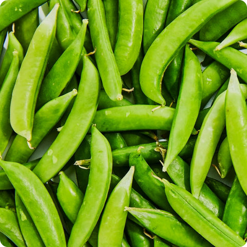 Snap Pea Seeds - Sugar Snap