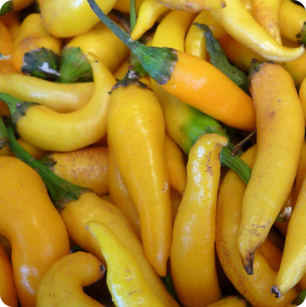 Ho Chi Minh Cayenne Hot Pepper Seeds