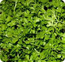 Pepper Cress