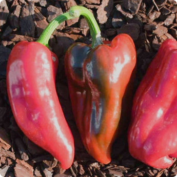 Tolli's Sweet Italian Pepper Seeds