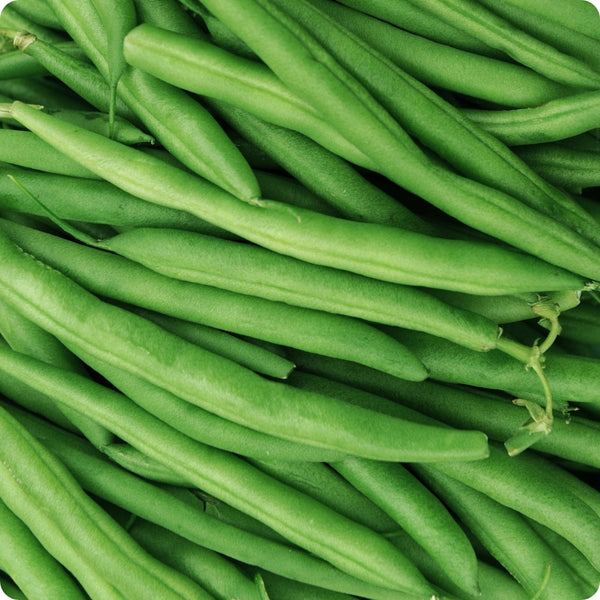 Bush Bean Seeds - Provider
