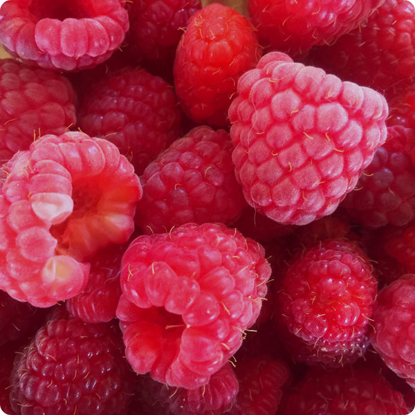 Raspberry Plants - Red Bounty