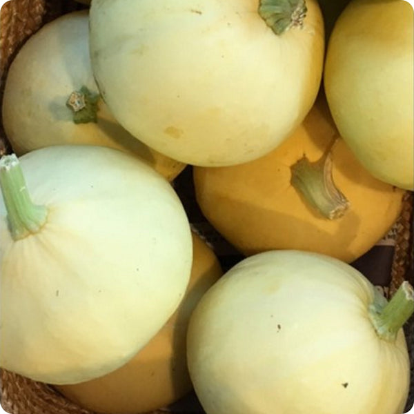 Desi Summer Squash Seeds