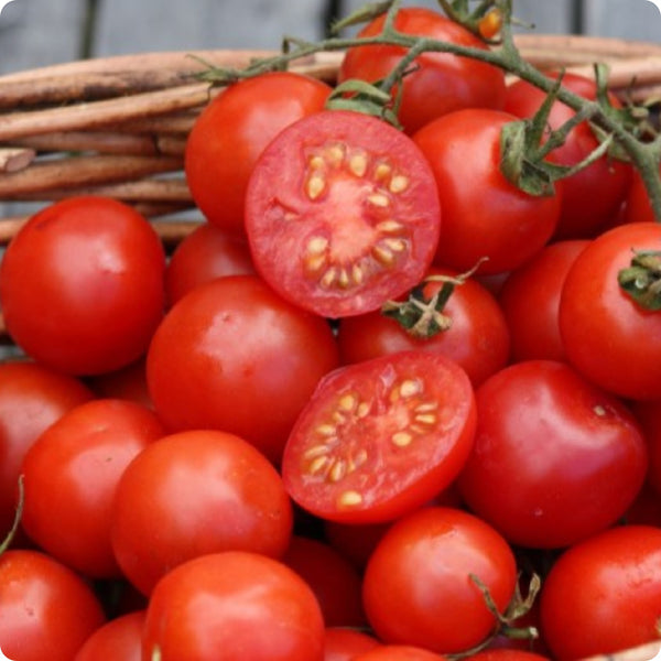 Tommy Toe - Cherry Tomato Seeds