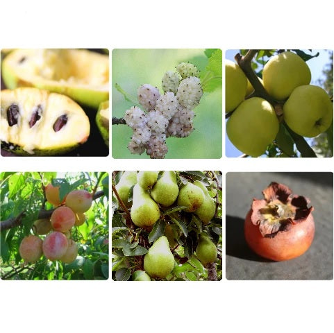 Your Deluxe Orchard Collection