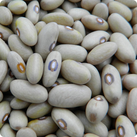 Bush Bean Seeds (Dry) - Arikara Yellow Bush