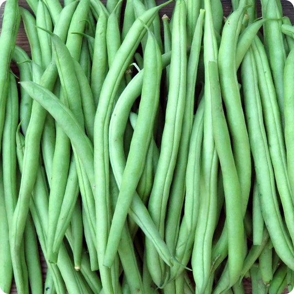Pole Bean Seeds - Climbing French Bean