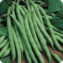 Pole Bean - Blue Lake