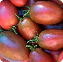 Ukrainian Purple Paste Tomato