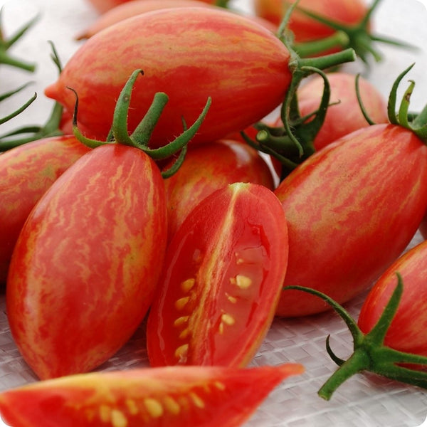 Pink Tiger Cherry Tomato Seeds