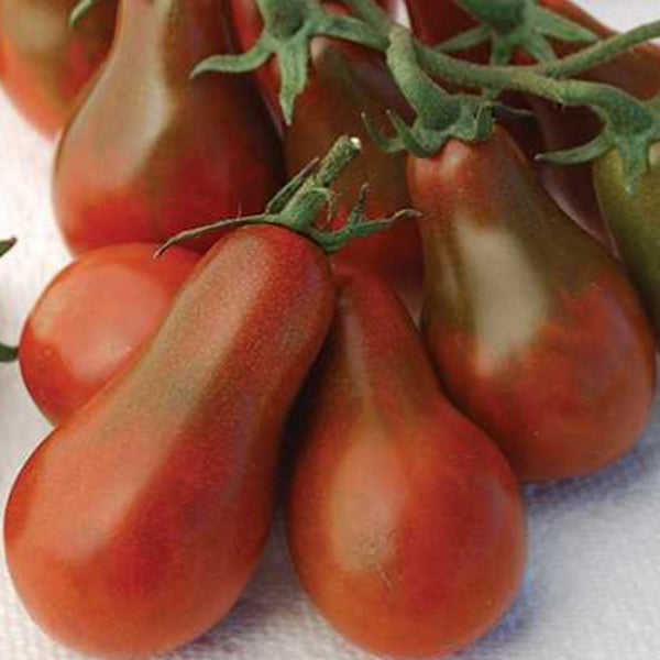 Chocolate Pear Cherry Tomato Seeds