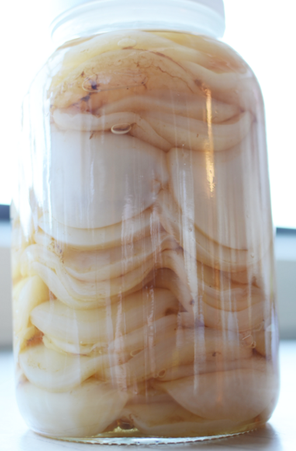 Save your Mothers: Why You Need a SCOBY Hotel