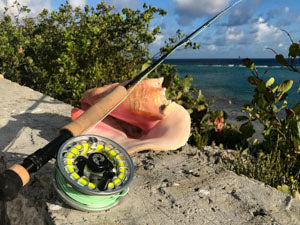 Rod and reel outfit resting on a conch shell.