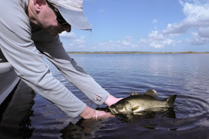 A nice fly-caught Florida largemouth bass.