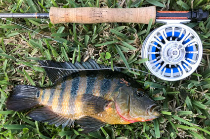 Scott Radian and Galvan Torque 5 with a Mayan cichlid