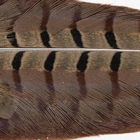 Ringneck Pheasant Tail Clumps - Natural (PT199)