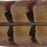 Ringneck Pheasant Tail Feathers - 1 Pair, Natural Cock (PTP199)