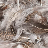 Hungarian Partridge Feathers (Loose) - Natural